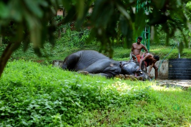 Konni Elephant Camp